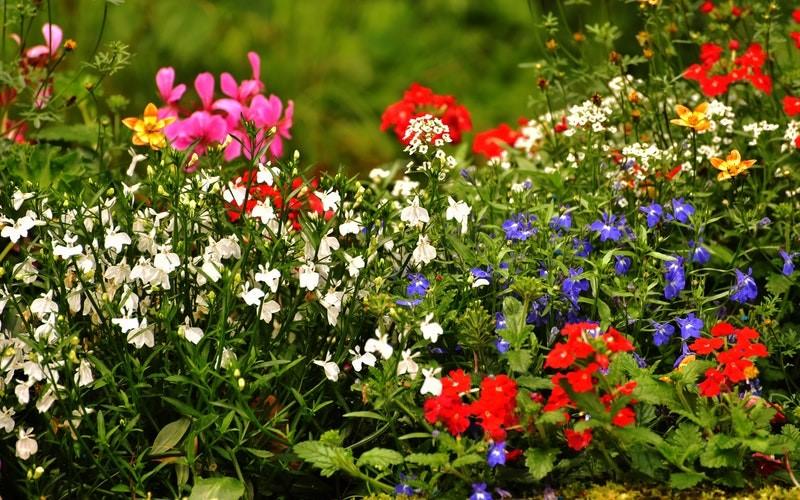 Enjoy Your Garden, Not The Bugs