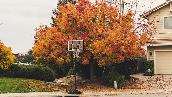 autumn tree in front of suburban home