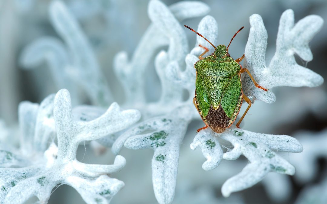 Watch for these Cold Weather Insects