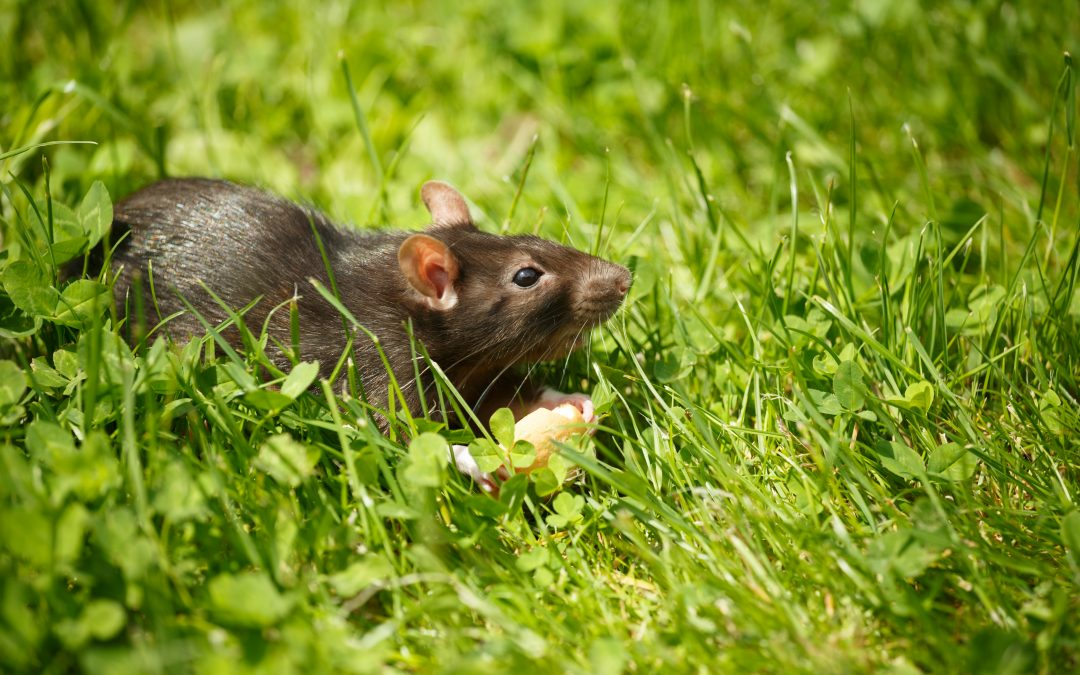 4 Tips to Help Keep Rodents & Wildlife Away from Your Pets