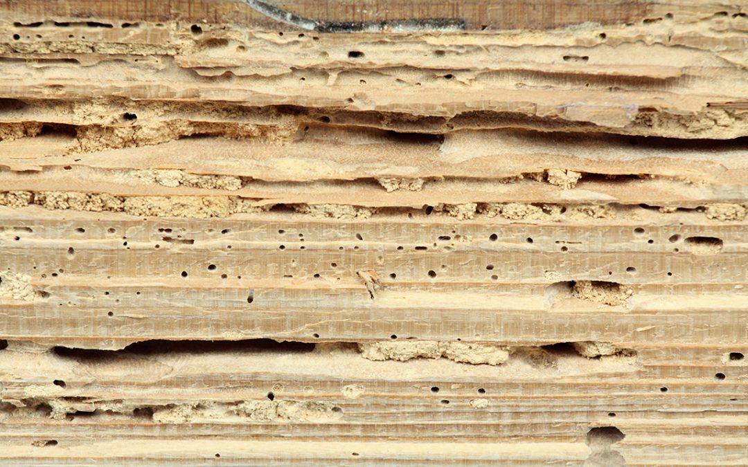 Termite Prevention Tips